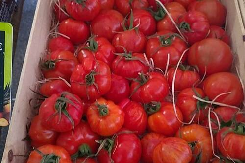Tomates au Primeurs Cyclades de Gassin - https://gassin.eu